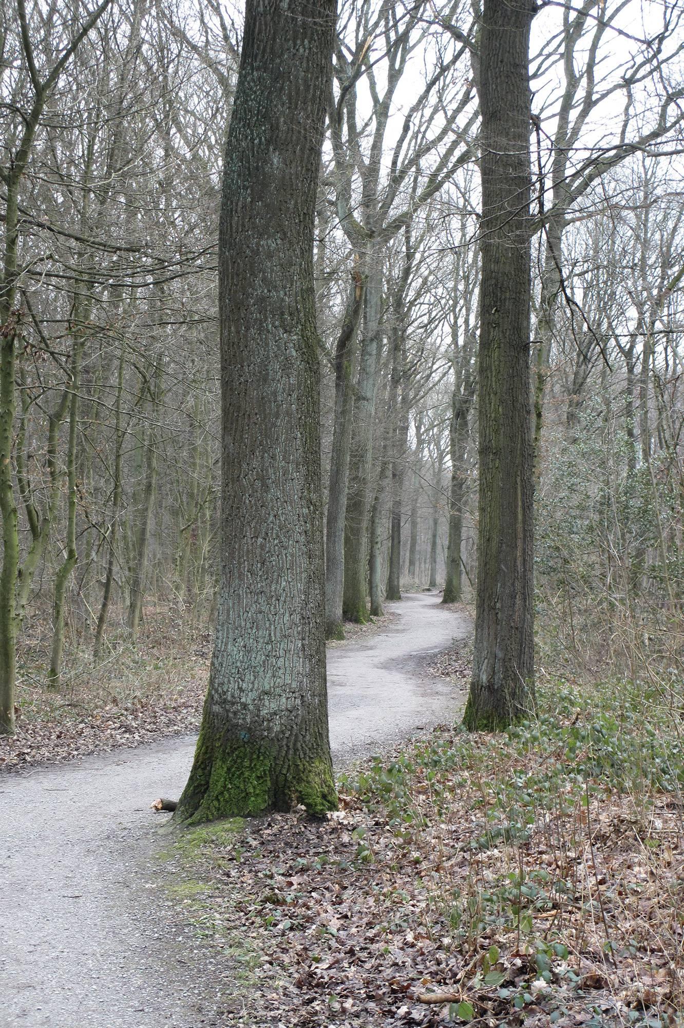 Unterbacher See Laufen